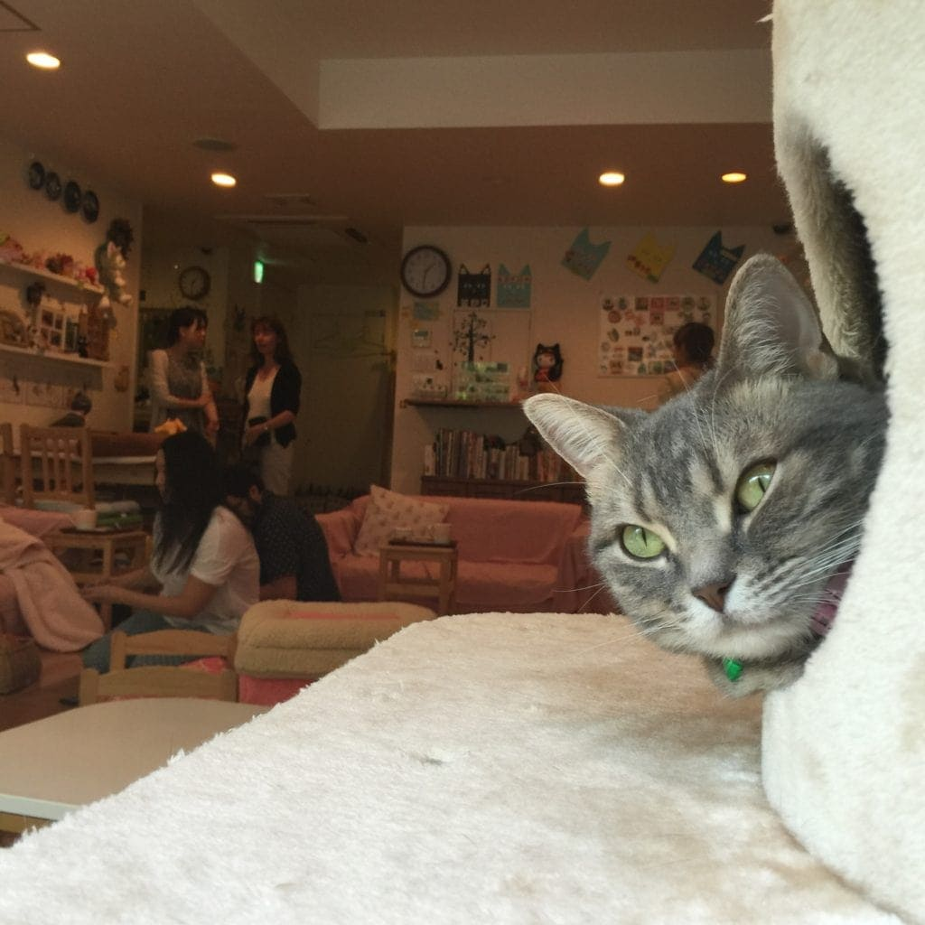 cat cafe japan cutest cafes in japan fromlusttilldawn.com travelpockets.com