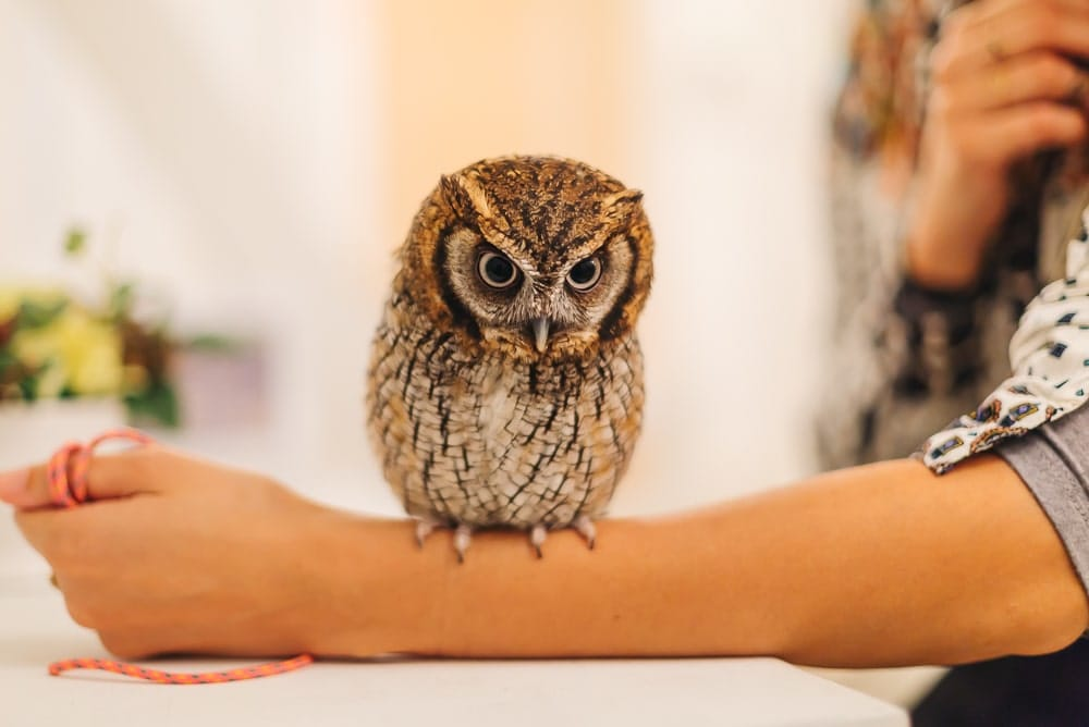 owl cafe japan cutest cafes in japan fromlusttilldawn.com travelpockets.com