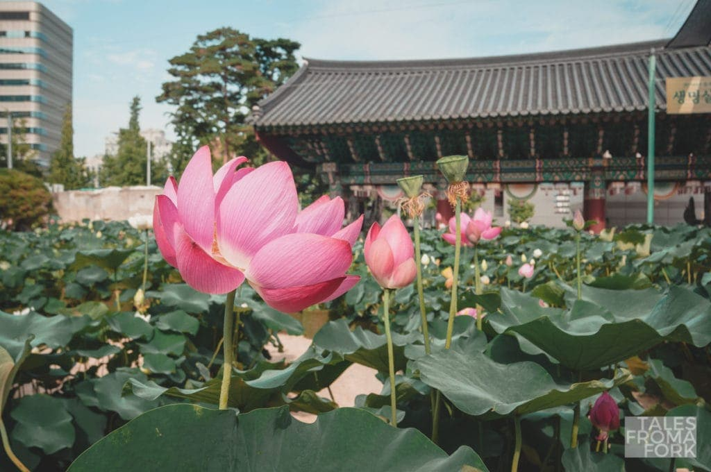 Walking around in Jogyesa Temple is one of the best things to do in Korea
