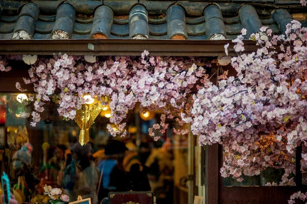 Seeing the beautiful cherry blossoms  is one of the best things to do in Korea