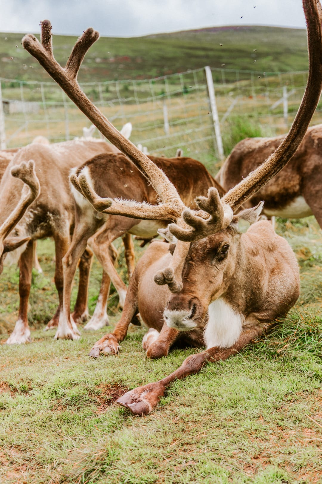 Cairngorm reindeer centre, one of the most Instagrammable places in Scotland, best places for landscape photography in scotland