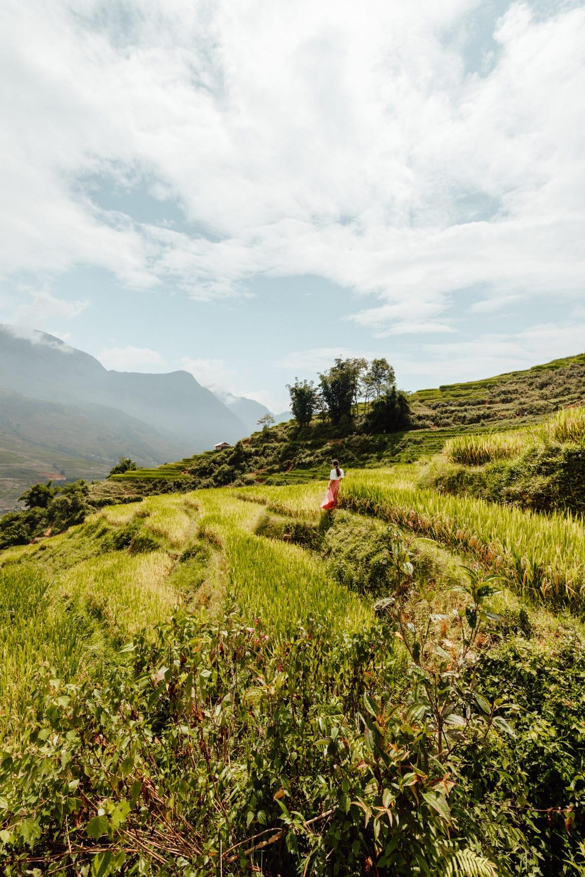hiking in sapa rice fields