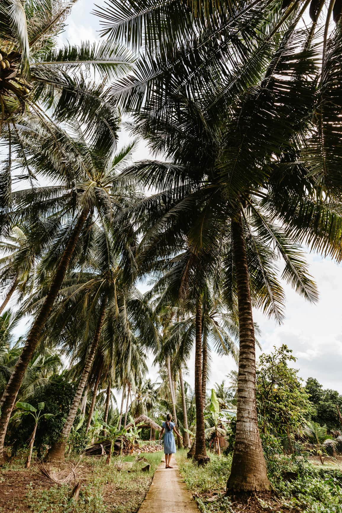 coconut trees in the mekong delta